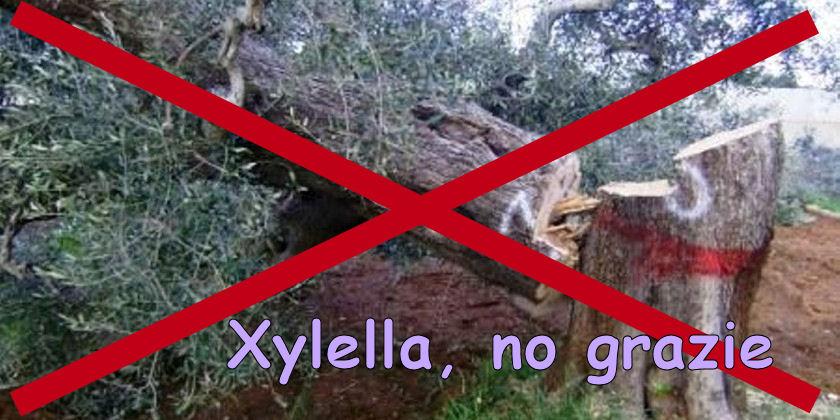 #Xylella fastidiosa: approvato schema decreto per l'Italia come area indenne
