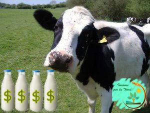 Scandalo quote latte – Multe triplicate in Italia ma l'UE non ne sapeva nulla