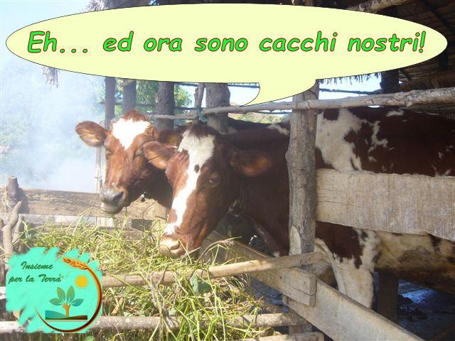L'abbattimento dei #bovini è stato chiesto dai #sindacati agricoli