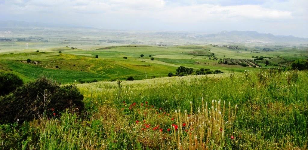 """Pagamenti PAC e PSR, gli #agricoltori sardi dicono """"basta"""" !"""
