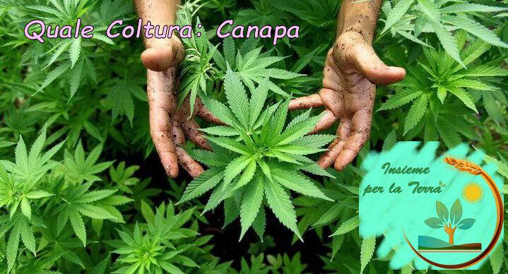 #Canapa: Coltivare e #guadagnare si può