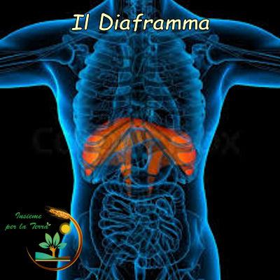 #Naturopatia con Francesca: Il #diaframma un muscolo sottovalutato (Seconda parte)