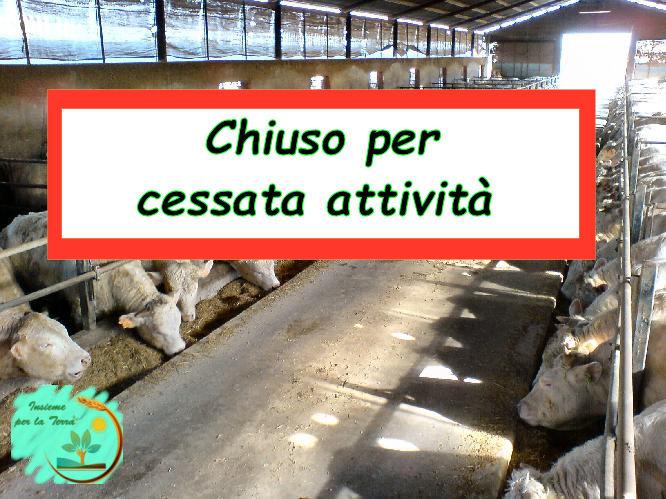UE: troppo #latte, meglio abbattere i #bovini. Poche ore al via libera