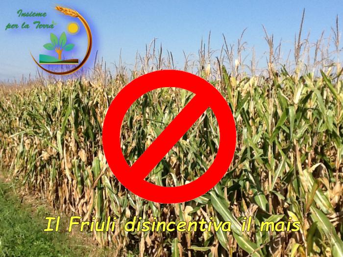Nella #patria della #polenta il Friuli vuole fermare la #coltivazione del #mais