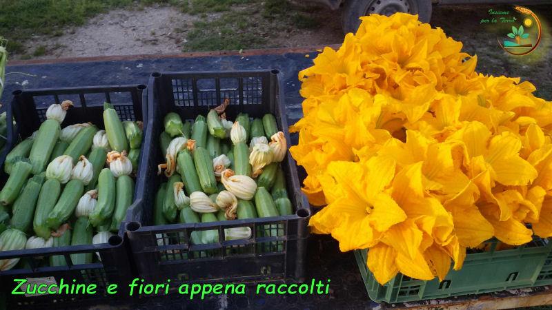Foto-5-Zucchine