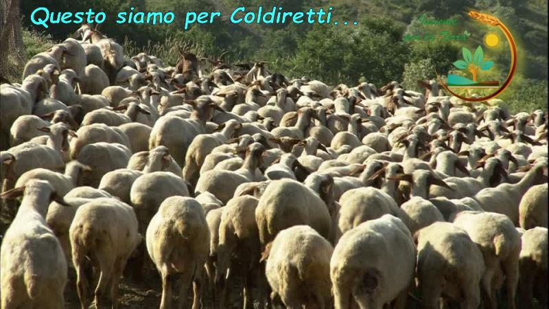 La #democrazia secondo #Coldiretti e C.
