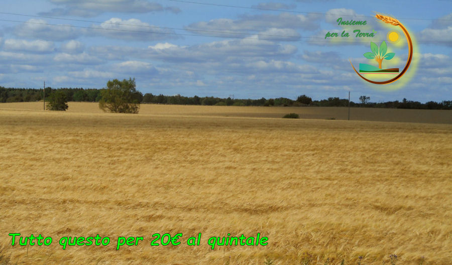 Guerra del #grano o la solita #speculazione ai danni degli agricoltori?