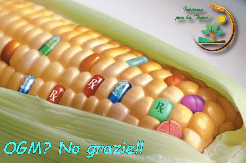#OGM: Il regalino dell'EU, ovviamente in totale #silenzio