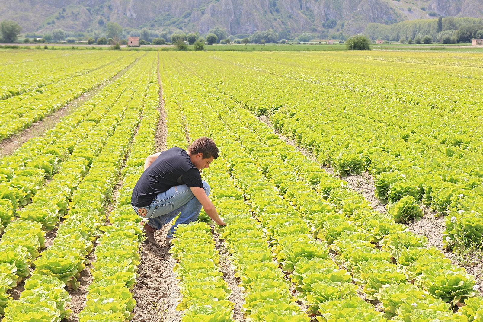 L'Italia dell'informazione #agricola distorta