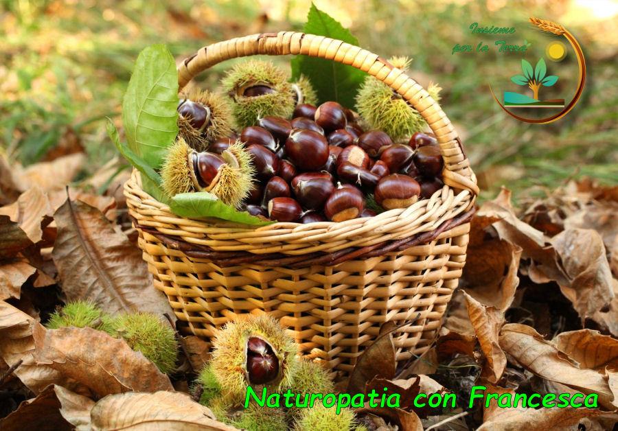 Naturopatia con Francesca – Dal guscio #spinoso, il cuore #generoso