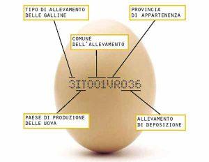 uova-codice