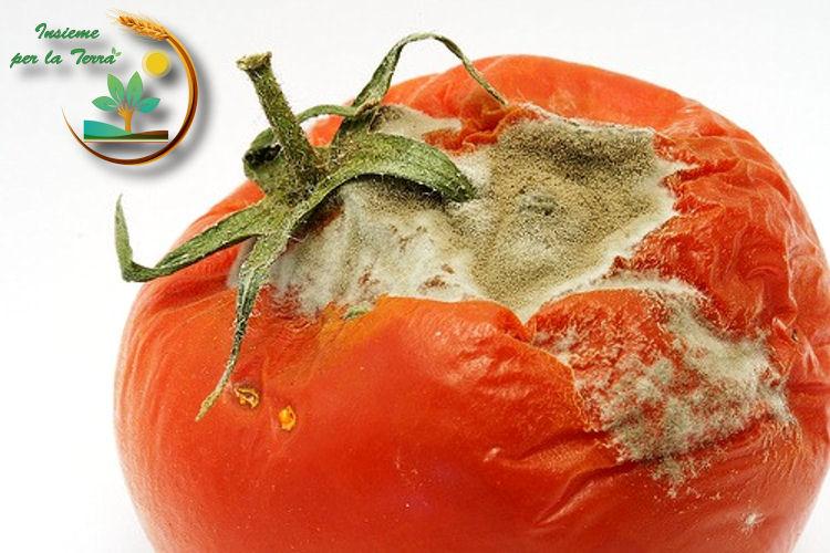 Pomodoro amaro per gli #agricoltori italiani. L'inutilità dei contratti di #Martina