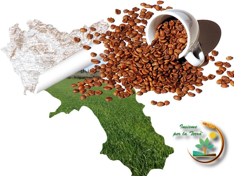 La Campania è la regina del #caffè