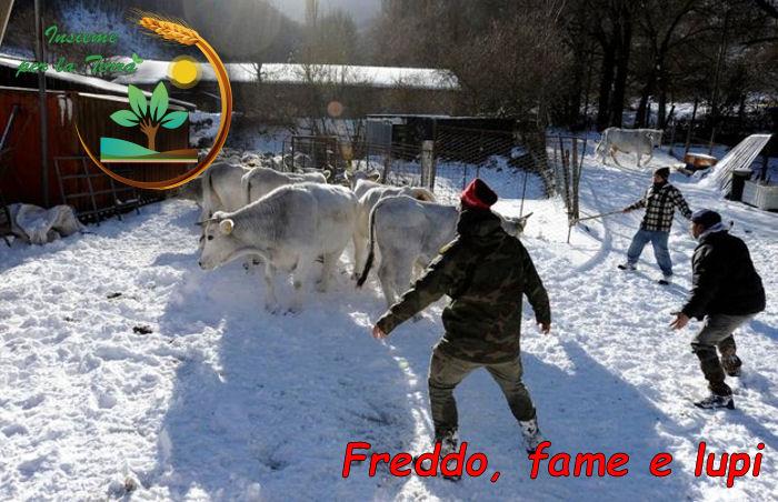 Mentre gli #animali muoiono i #politici del PD si godono le #vacanze natalizie