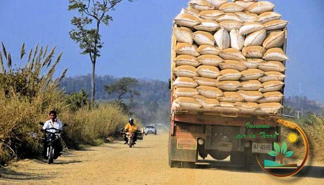Riso: i #pellegrinaggi degli industriali italiani in #Cambogia