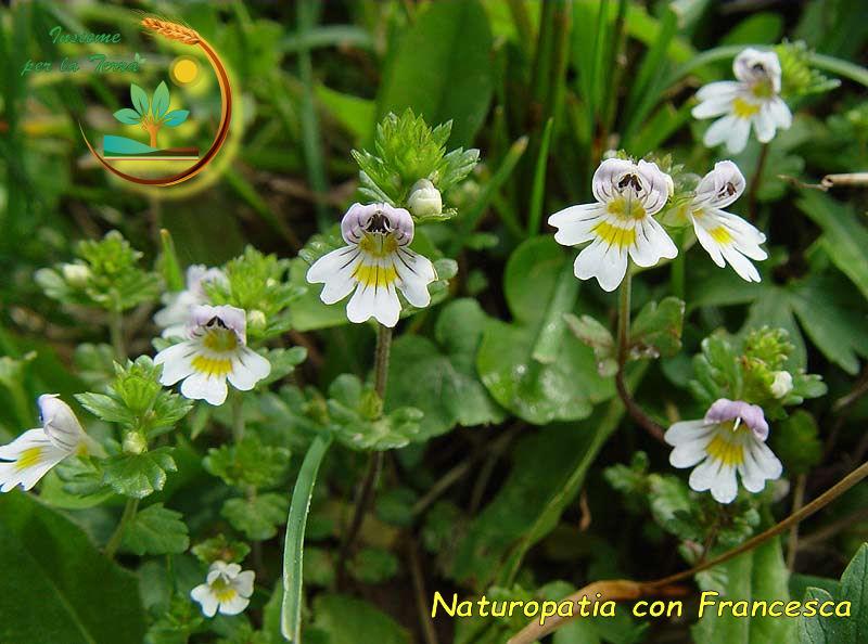 Naturopatia con #Francesca – Cambi di #temperatura e vento, che sofferenza per #occhi, #naso e #gola