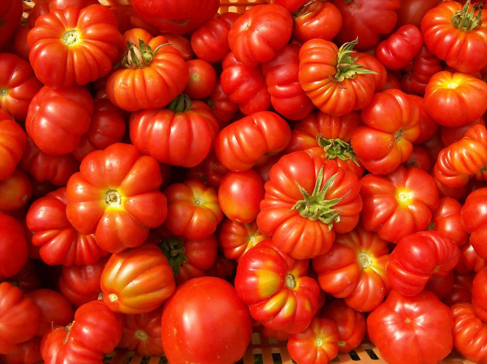 L'agricoltura italiana è ridotta alla carità
