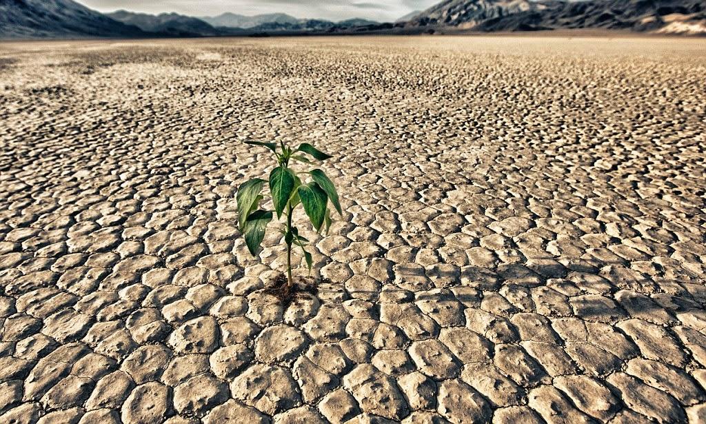 Siccità, desertificazione, clima estremo: le soluzioni