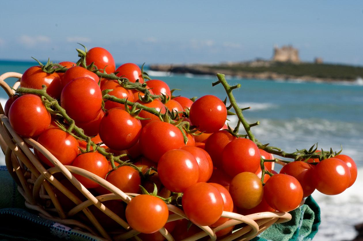 PD, Lega e Forza Italia hanno voluto il pomodoro africano del Camerun. Il mercato crolla, agricoltori nella disperazione